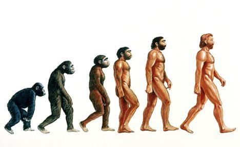 Dasar-dasar Evolusi