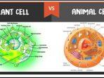 Perbedaan Sel Hewan Dengan Sel Tumbuhan