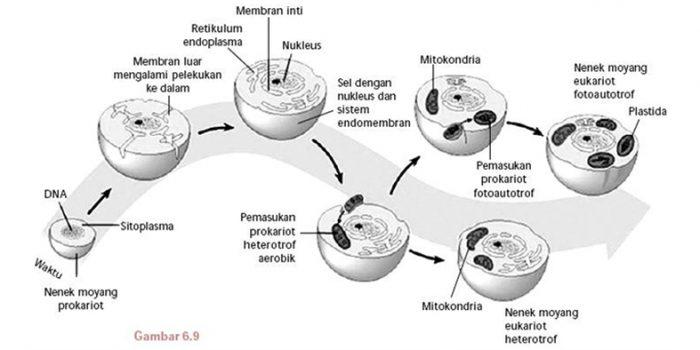 Proses evolusi biologi