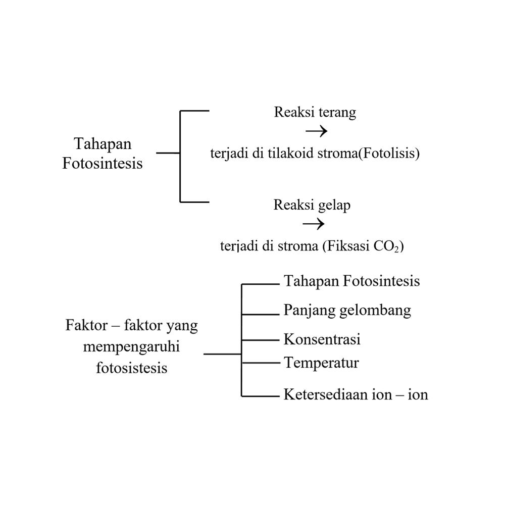 Tahap fotosintesis