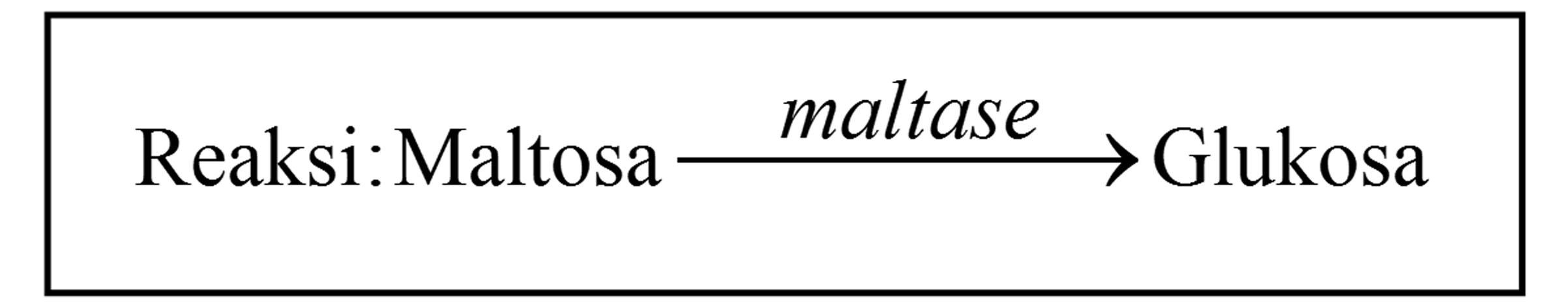 Tatanama enzim